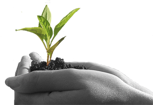 Grow and Nurture Your RTO, RTO Software